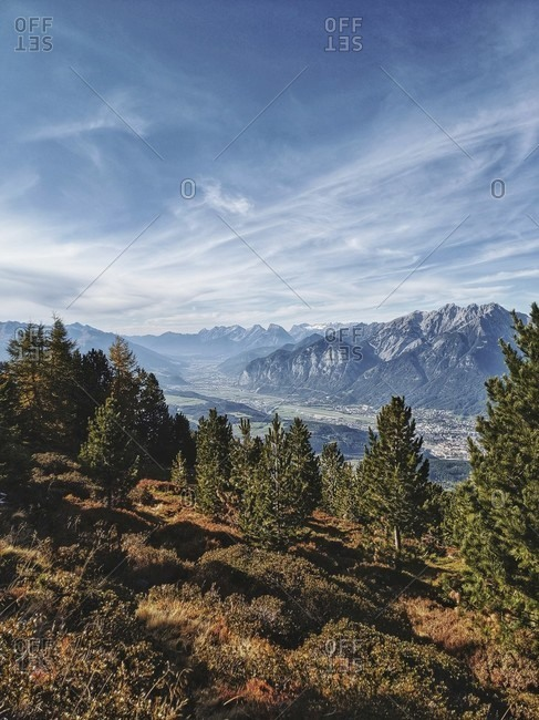 On the way on the tyrolean stone pine path, view of the karwendel massif with stone pine in the foreground