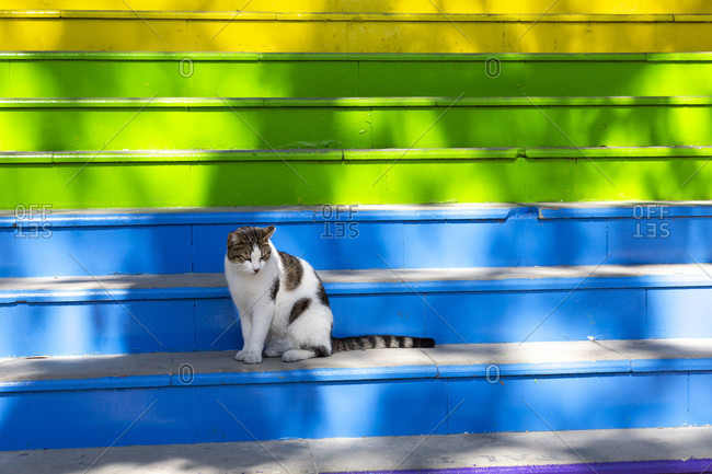 Cat on colorful steps, istanbul