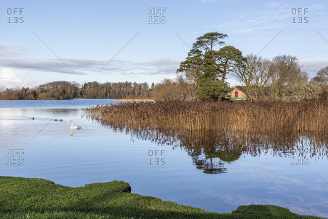 East bank of lough leane, the largest of the three lakes in killarney national park, munster province, republic of ireland