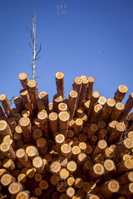 Wood, timber industry, stack, stock, piled up, wood stack