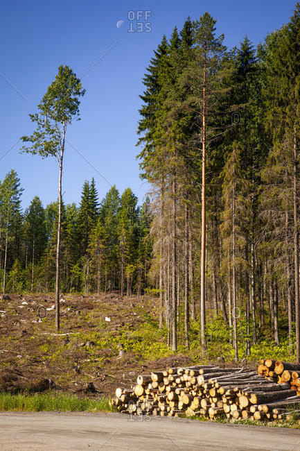 Wood, timber industry, stack, clearing area