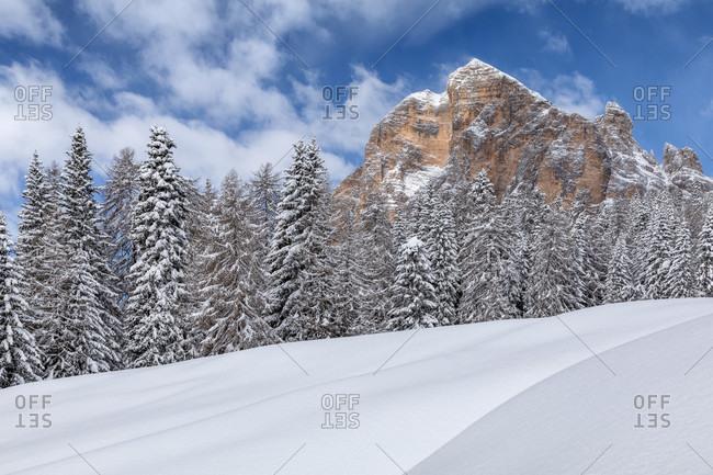 Winter landscape at the foot of the tofana di rozes, Cortina d'Ampezzo, Belluno, Veneto, Italy