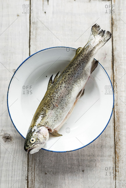 Trout fresh from the market on a maritime plate and white wooden background
