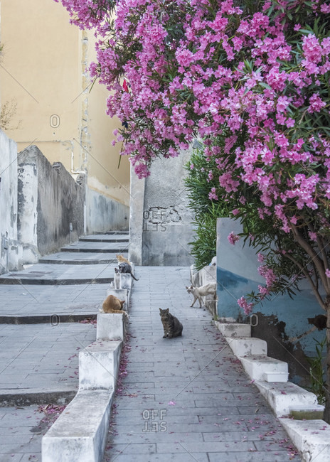 Sicily - Sunny impressions of the Aeolian Islands, Stray cats fed by the locals on the island of Salina.