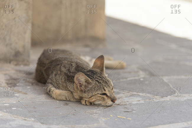 Sicily - Sunny impressions of the Aeolian Islands, Cat is lounging in the shade on Alicudi Island.
