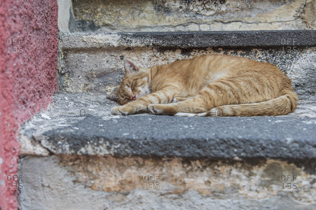 Sicily - Sunny impressions of the Aeolian Islands, Cat is lounging in the shade on a staircase. Salina.