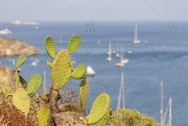 Sicily - Sunny impressions of the Aeolian Islands, Cacti on the rocky coast on Panarea, sailing boats in the background.