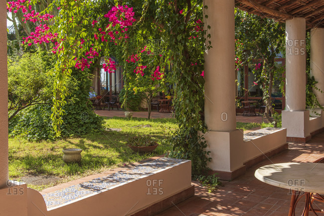 Sicily - Sunny impressions of the Aeolian Islands, Bougainvillea in the hotel garden; Lipari.
