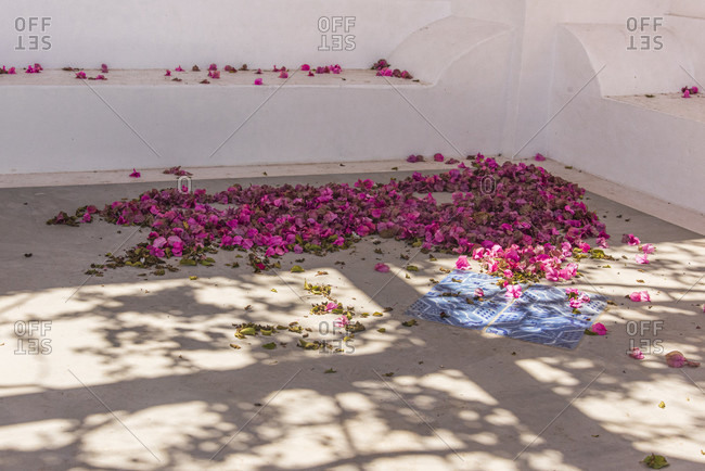 Sicily - Sunny impressions of the Aeolian Islands, Bougainville flowers in a courtyard.