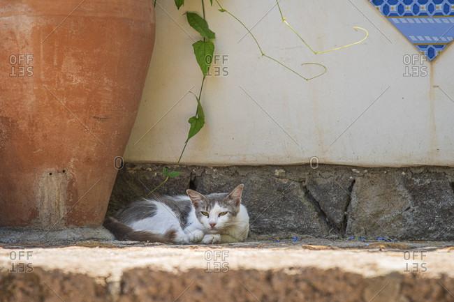 Sicily - Sunny impressions of the Aeolian Islands, also known as Aeolian Islands or Isole Eolie: Lipari, Stromboli, Salina, Vulcano, Panarea, Filicudi and Alicudi. Cat on a step in Panarea.
