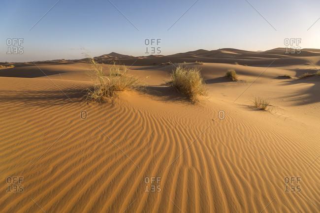 Sand dunes, Erg Chebbi, Merzouga, Morocco