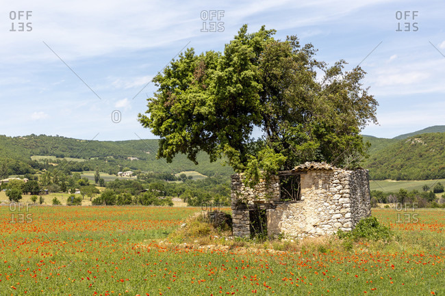 Ruin in the poppy field, near Banon, Alpes-de-Haute-Provence in the Provence-Alpes-C�te d'Azur region