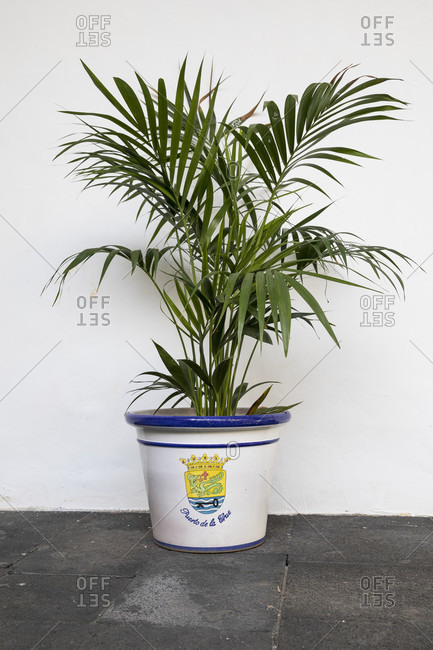 Potted plant with the coat of arms of Puerto de la Cruz, Tenerife, Canary Islands, Spain