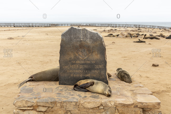 October 20, 2019: Cape Cross Seal Reserve, Seal Reserve, Cross Cape, Skeleton Coast Park, Namibia