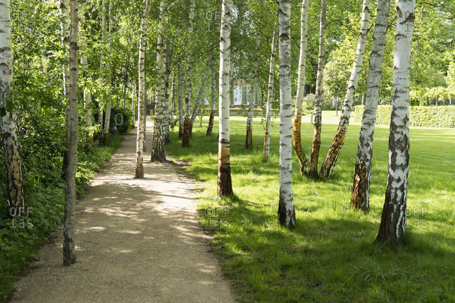 May 15, 2020: Berlin, Wannsee, garden of the Liebermann Villa, path overgrown with birch trees