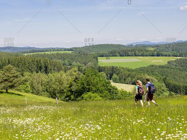 June 1, 2019: Hiking on the Zwealersteig, flower meadow Pfauss