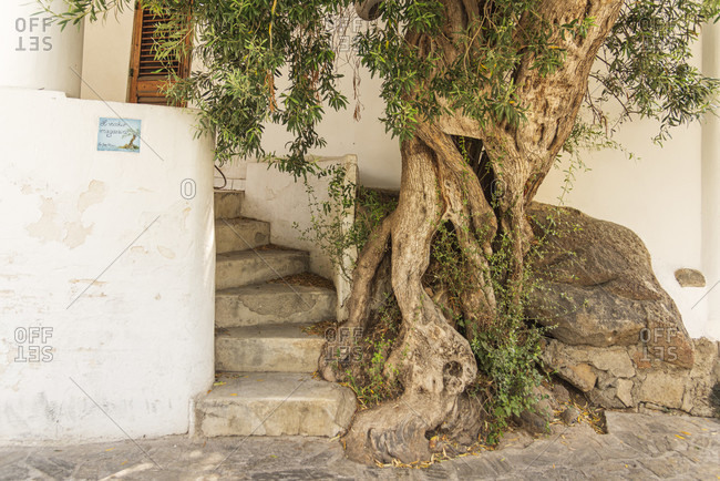 July 20, 2018: Sicily - Sunny impressions of the Aeolian Islands, also known as Aeolian Islands, entrance area of a house with stairs and tree root, Panarea.
