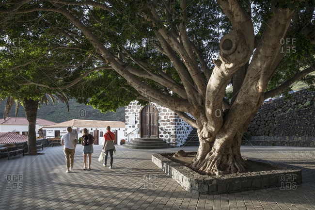 January 29, 2020: Village square with huge deciduous tree at the Ermita de la Inmaculada Concepcion church in the mountain village of Masca, Tenerife, Canary Islands, Spain