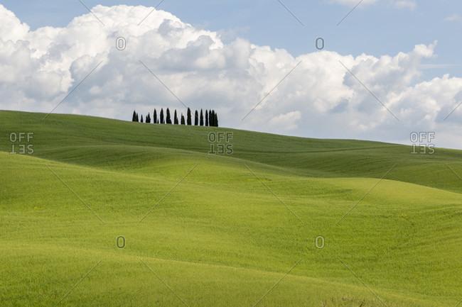I Cipressi di San Quirico d'Orcia, San Quirico d'Orcia, Tuscany, Italy