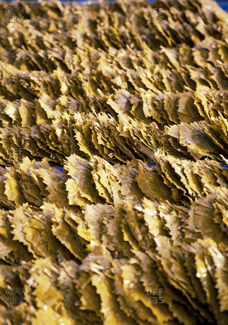 Grape leaves, self-sufficiency, nutrition, supply, market