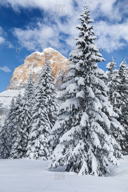 Glimpse of the Tofana di Rozes among the snowy trees after a snowfall, Dolomites, Cortina d'Ampezzo, Belluno, Veneto, Italy