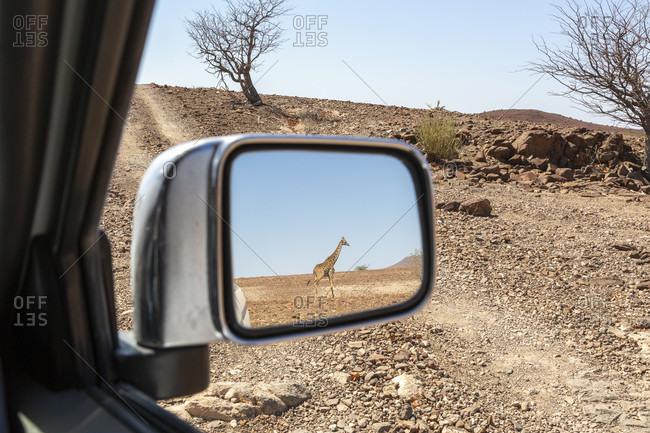 Giraffe in the rear view mirror, Damaraland, Namibia
