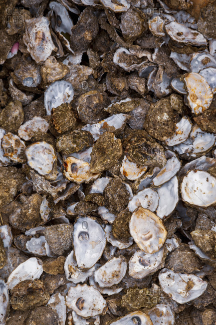 Garbage, shells, oysters, oyster shells, many