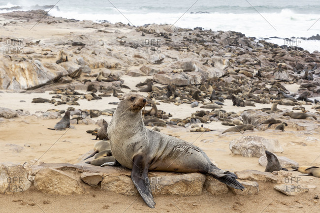 Cape Cross Seal Reserve, Seal Reserve, Cross Cape, Skeleton Coast Park, Namibia