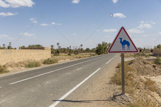 Camel in Erfoud, Sahara, Morocco