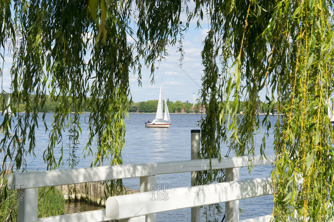 Berlin, Wannsee, shore, weeping willow, view of the lake with a sailboat
