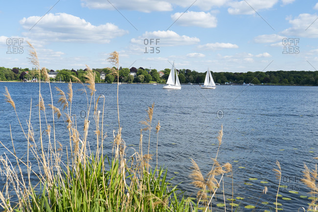 Berlin, Wannsee, sailing boats and tall grass