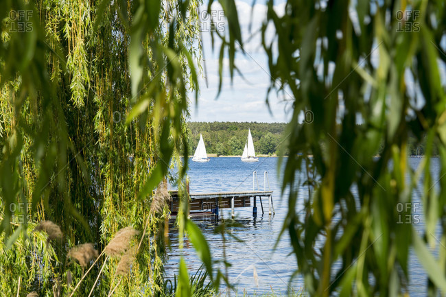 Berlin, Wannsee, riverbank, weeping willow, view of the lake with sailing boats