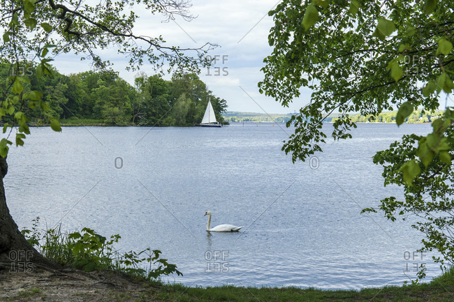 Berlin, Wannsee, Lieper Bucht, bathing place, swan, sailing boat lying in front of the Pfaueninsel