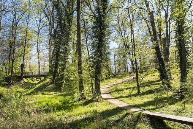 Berlin, Wannsee, Havel-Uferweg in spring