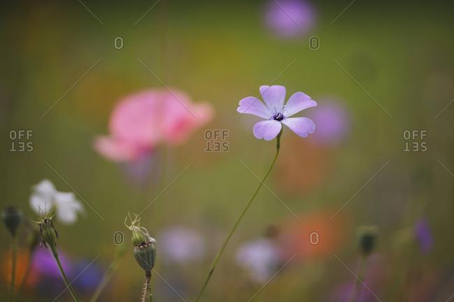 Beautiful landscape of wildflower meadow