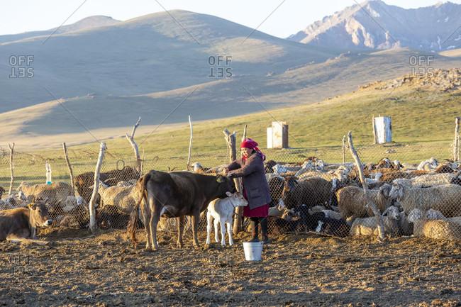 August 11, 2019: Nomads, Song Kol Lake, Song Kol National Park, Kyrgyzstan