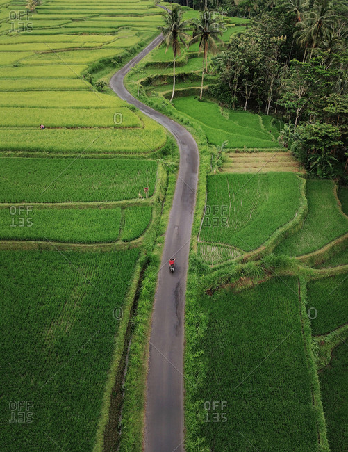 Aerial view of man driving a scooter/motorbike on road through vibrant green Tegalalang rice fields in tropical Bali, Indonesia, Asia