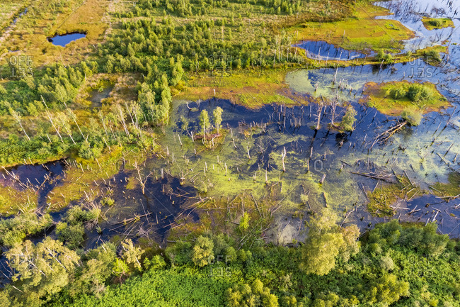 Abstract aerial view of drowned trees, nature reserve Amtsvenn (Aamsveen), Ahaus, Nordrhein-Westfalen, Germany