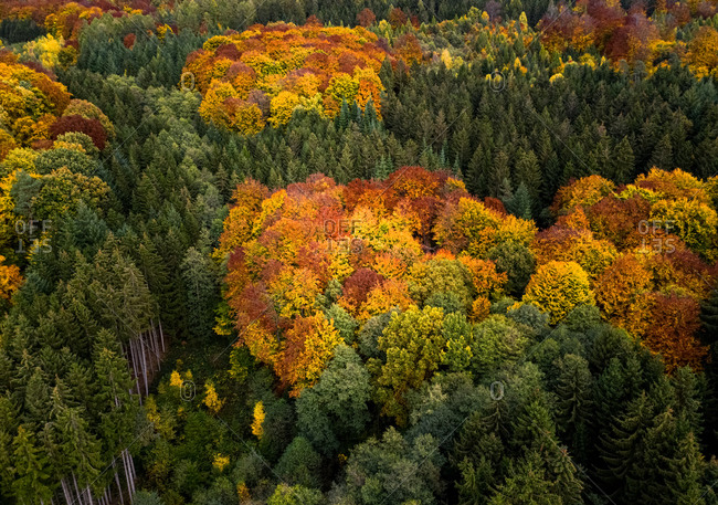 Aerial view of an autumn landscape with  trees.