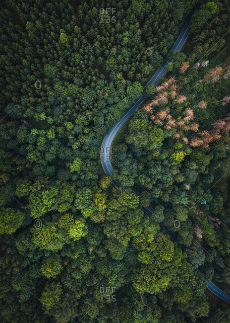 Abstract aerial view of winding road trough forest in National  Schweiz, Germany.