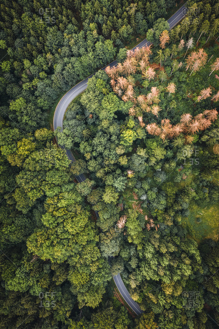 Aerial view of a group of dead trees in the middle of the forest in National Schweiz, Germany.