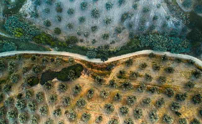 Aerial view of an olive grove on the hills lighted in an oddly way by the late afternoon sun light near Petrizzi, Calabria, Italy.