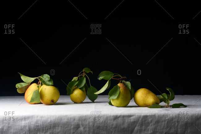 Fresh raw organic pears with leaves picked from the garden on white linen tablecloth