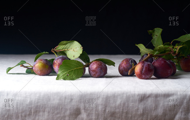 A branch from the plum tree with fresh ripe organic fruits