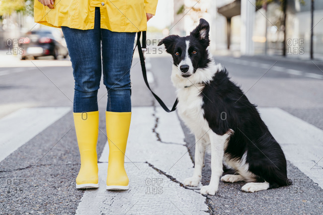 Woman standing with dog on pedestrian crossing during sunny