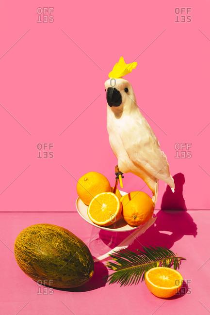 Funny parrot sitting on orange fruit against pink background