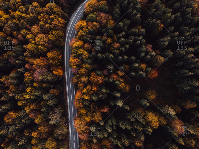 Highway leading through a lush autumn forest viewed from above
