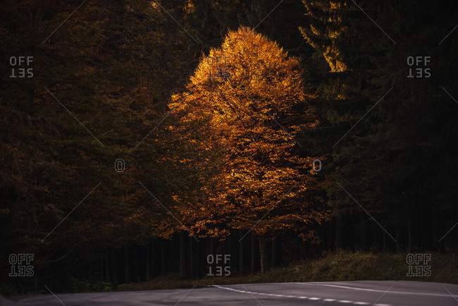 Beautiful fall trees lining a highway