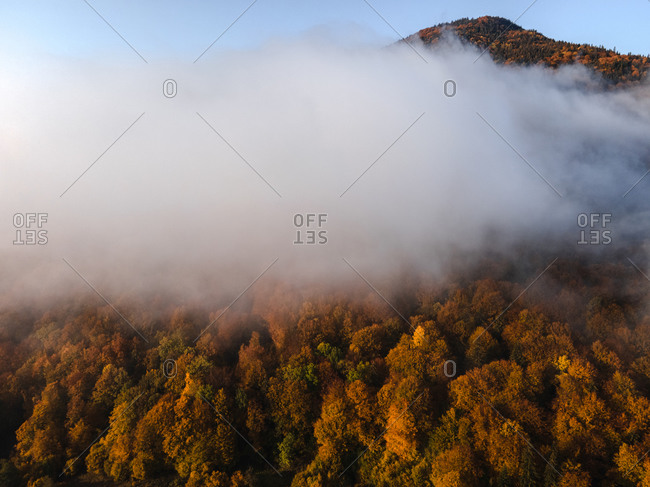 Dense fog on mountaintop covered in beautiful fall foliage