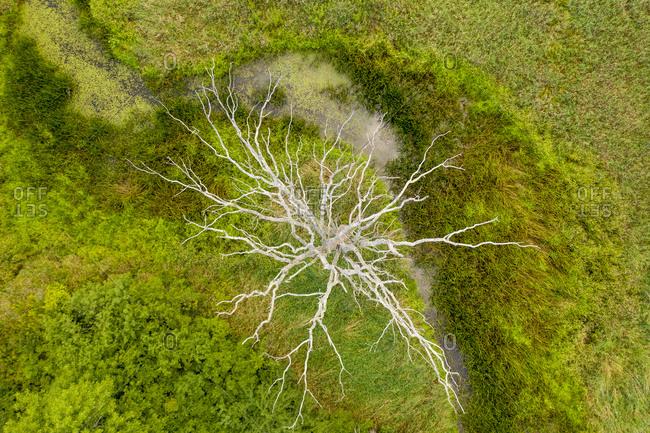Bare tree beside creek in rural Weybridge, Vermont